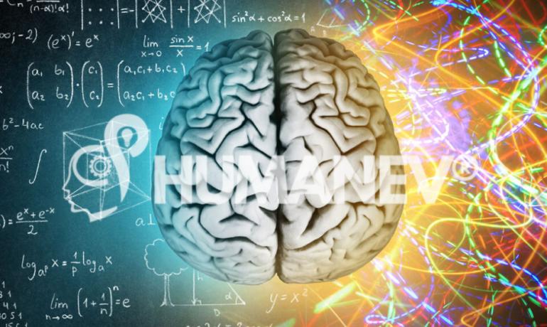 Dall'azienda alla neuro, col Neuromanagement | Humanev®
